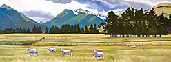 sheep-nr-glenorchy-lg